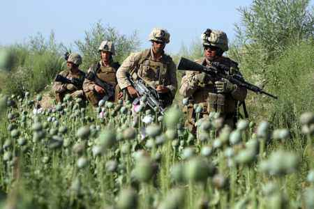 Marines Bypass Taliban Opium Fields in Afghanistan