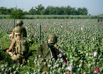 44615131 poppies1 416 Marines Bypass Taliban Opium Fields in Afghanistan