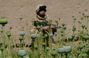 file:///D:/MIKE/WEB_DEVEL/WRH/IMAGES/afghan_opium0430.jpg